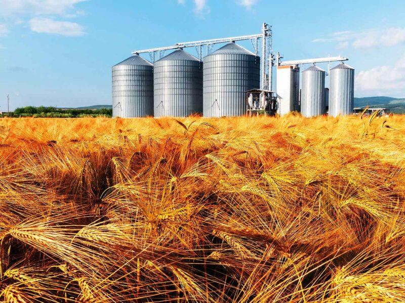 Važnost pravilnog skladištenja žitarica